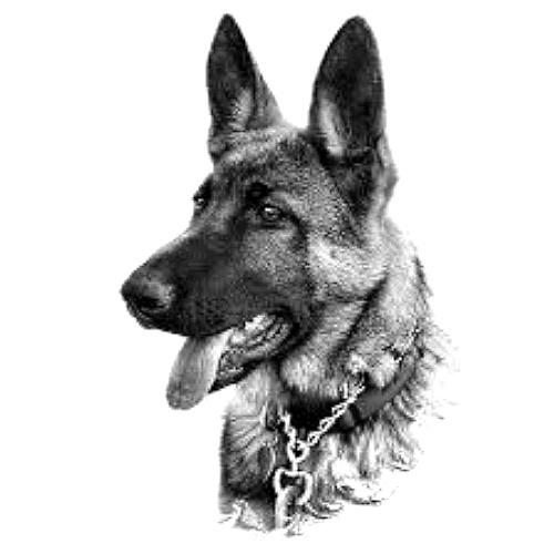 Wzór Tatuażu Pies Monika Wypożyczalnia Sprzętu